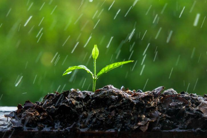 Prepara tus cultivos para las precipitaciones