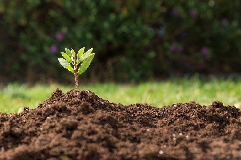 Fertilización orgánica: más rentable y duradera