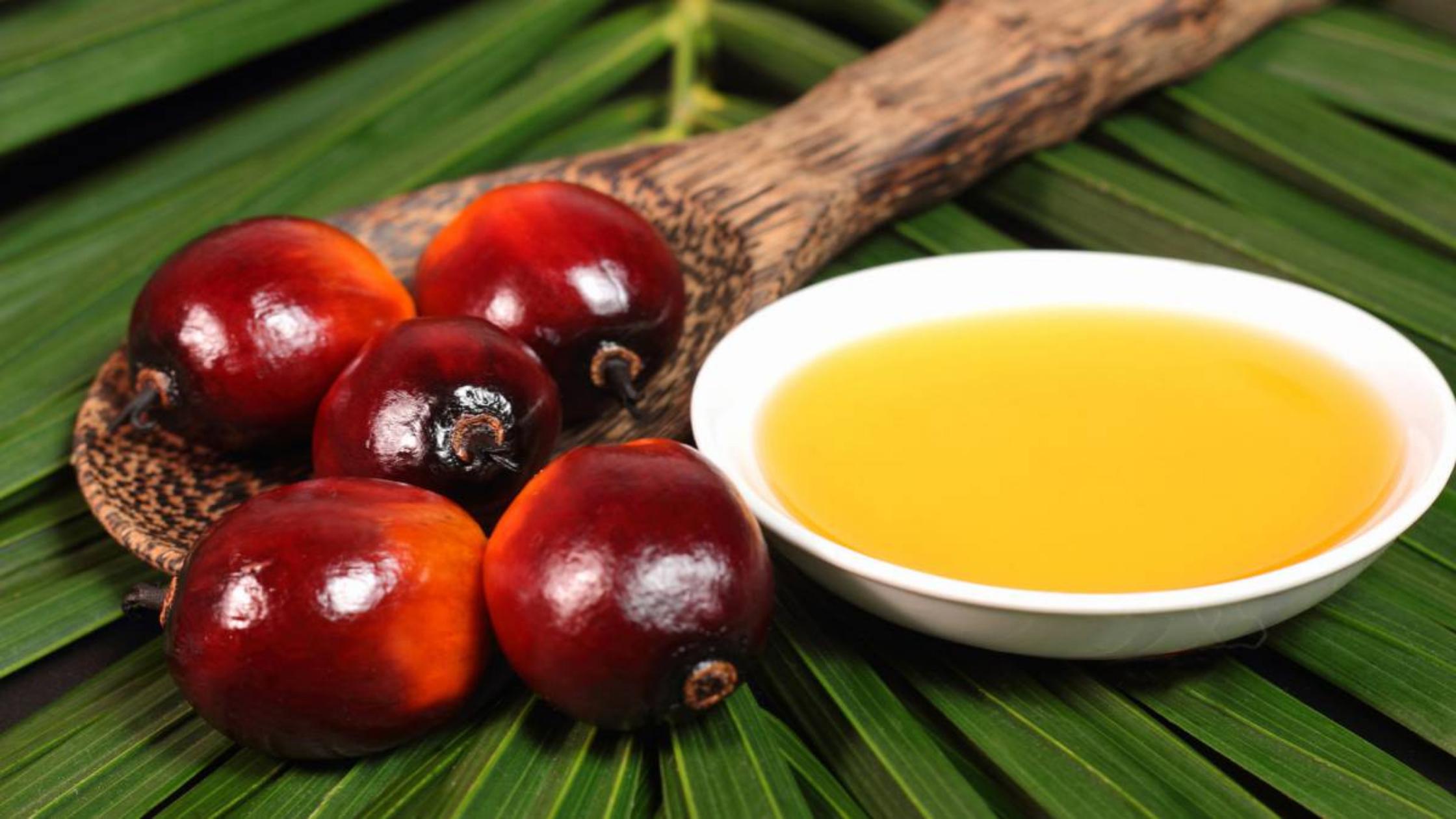 Colombia es el cuarto país productor de aceite de palma en escalafón mundial