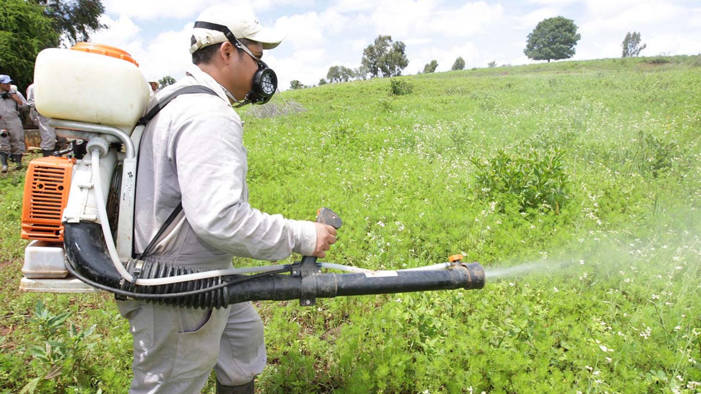 Beneficios de los insecticidas para la protección de cultivos