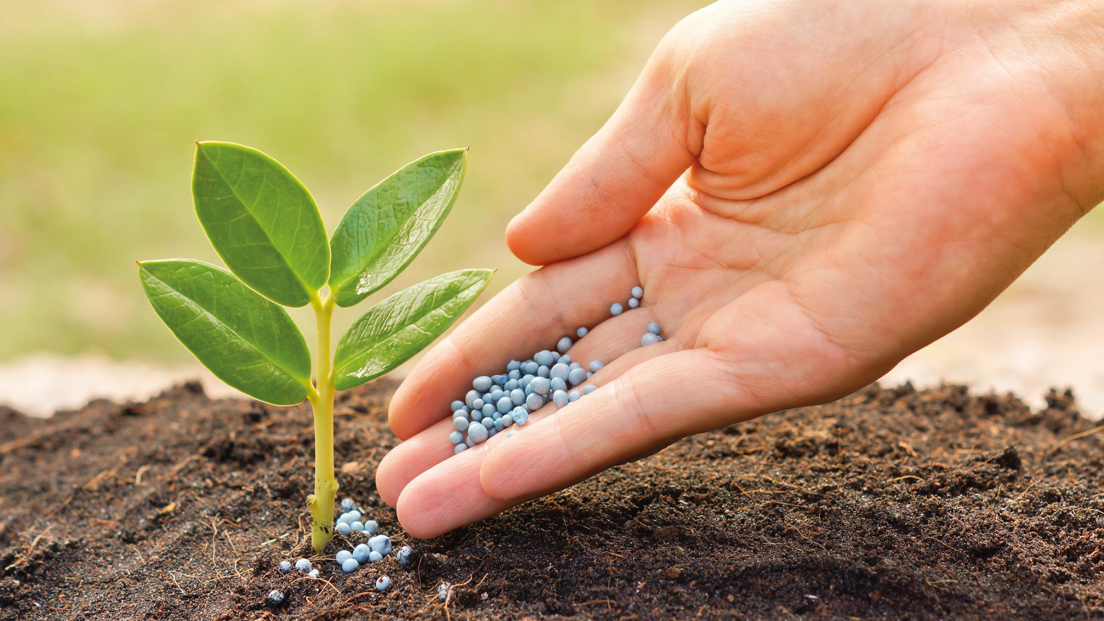 Producción mundial de alimentos se debe a fertilizantes