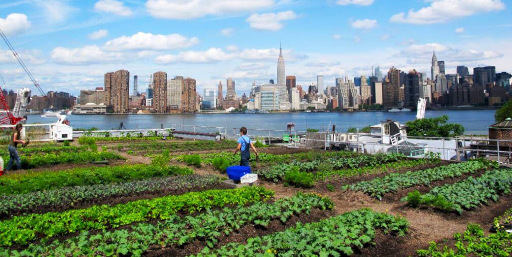 Agricultura Urbana, un fenómeno global