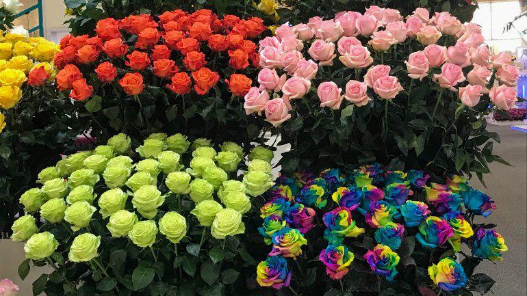Exportación de flores en Colombia, un negocio constante
