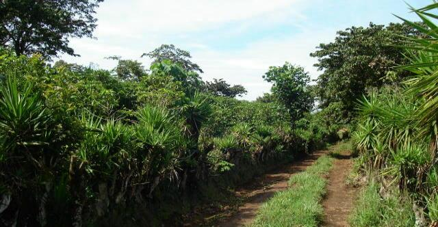 small farms for sale in Naranjo