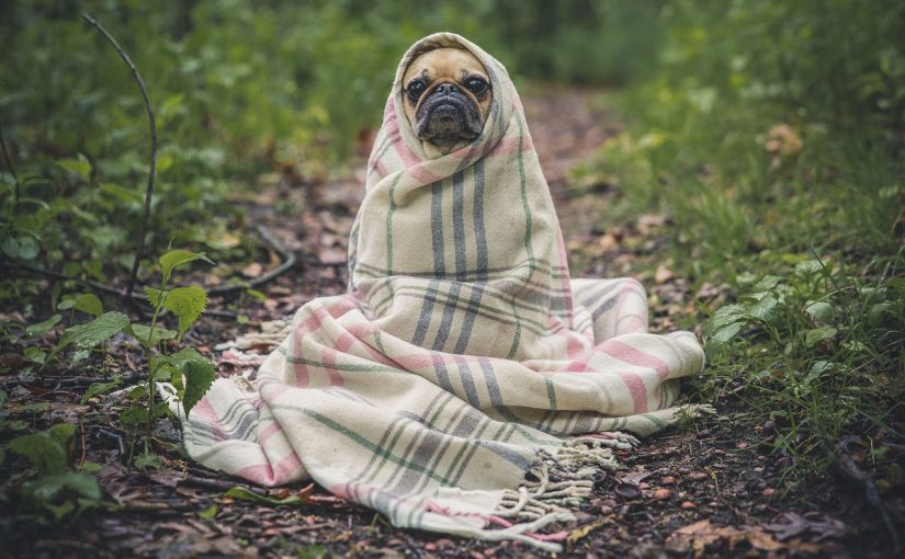 Dressing up your Dog in Winter