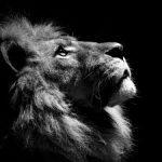 crestfallen lion