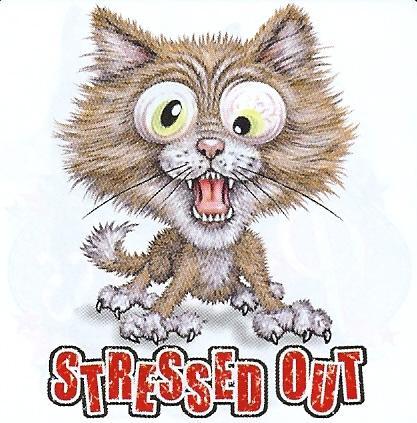 Stressed…