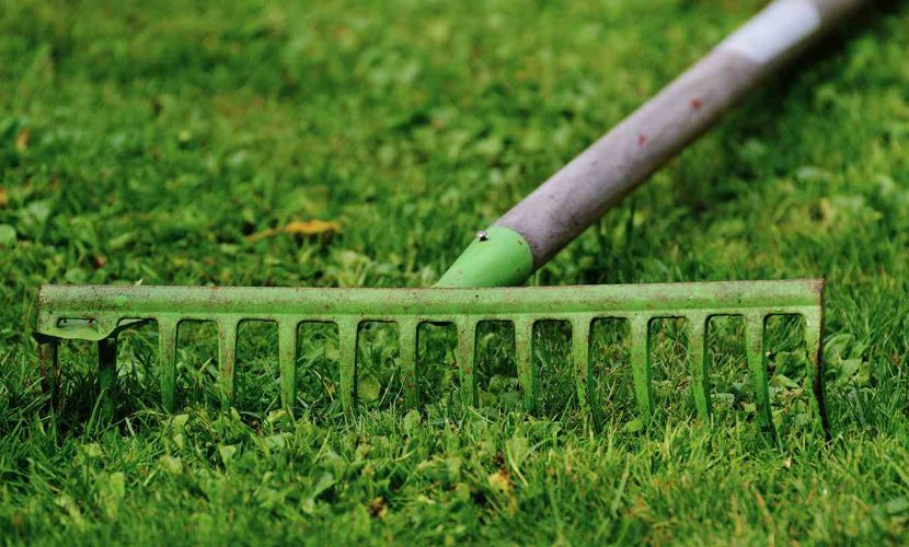 Rake your lawn to wake it up