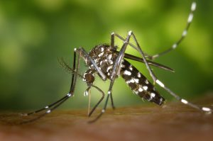 West Nile Virus is Here!