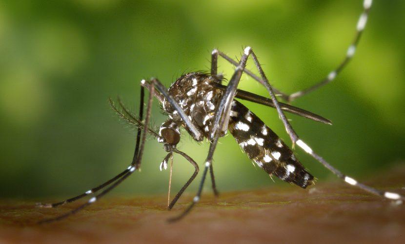 https://www.pexels.com/photo/black-white-mosquito-86722/