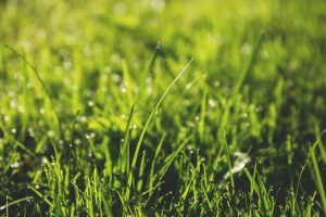 How Often Should You Be Aerating Your Lawn