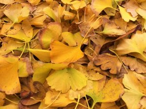 How Much Damage Could The Fallen Leaves I Left On My Lawn Through Winter Cause Me Come Spring?
