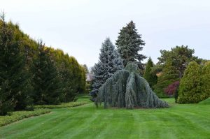 Environmental Benefits of Lawns