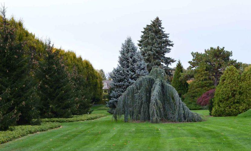 Environmental Benefits of Lawns
