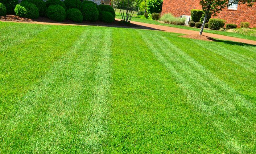 https://pixabay.com/en/photos/grass%20cutting/?
