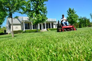 Basic Lawn Care Tips for Homeowners