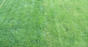 Lawn Care Experts Cite The Pros And Cons Of Organic Lawn Treatment