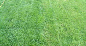 Important Lawn Care Tips For Mowing Cool Season Grasses