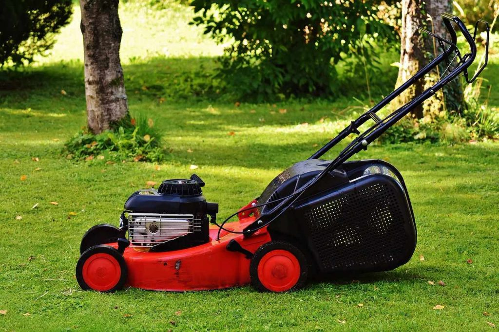 weed control and removal