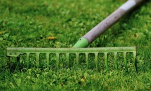 The Fundamentals Of Lawn Care That You Need To Master