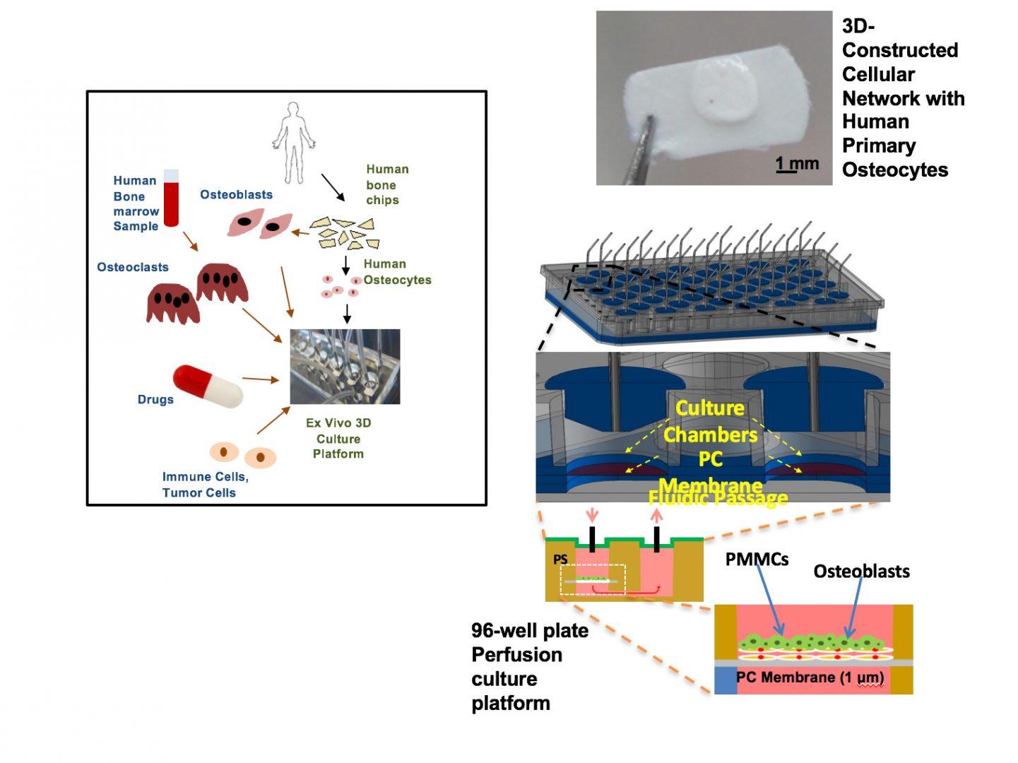Zilberberg Lab Research - HMH CDI