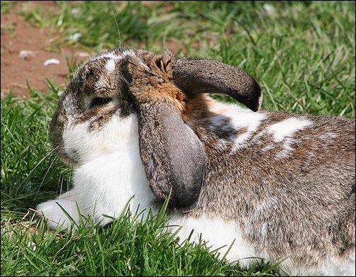 Cage-Free Rabbits