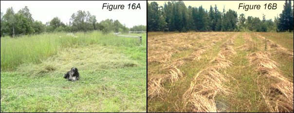 Scythe-cut Hay, American Style (L) and European Style (R)