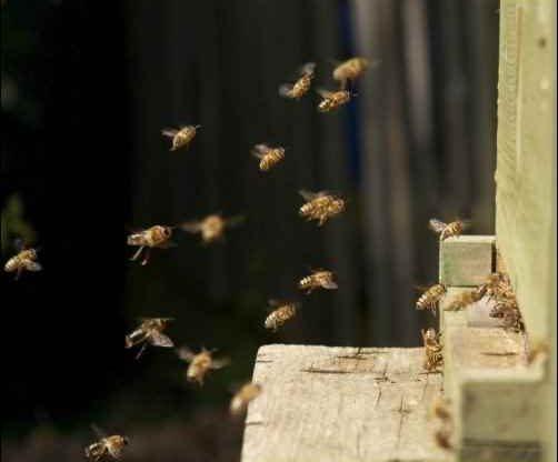 bees hive natural beekeeping