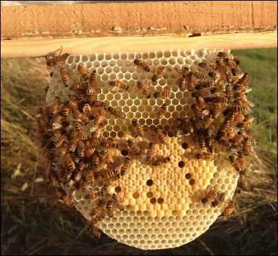 natural beekeeping bees hive