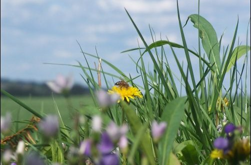 Is Beekeeping a Lost Art, How to Help Save the Honeybees