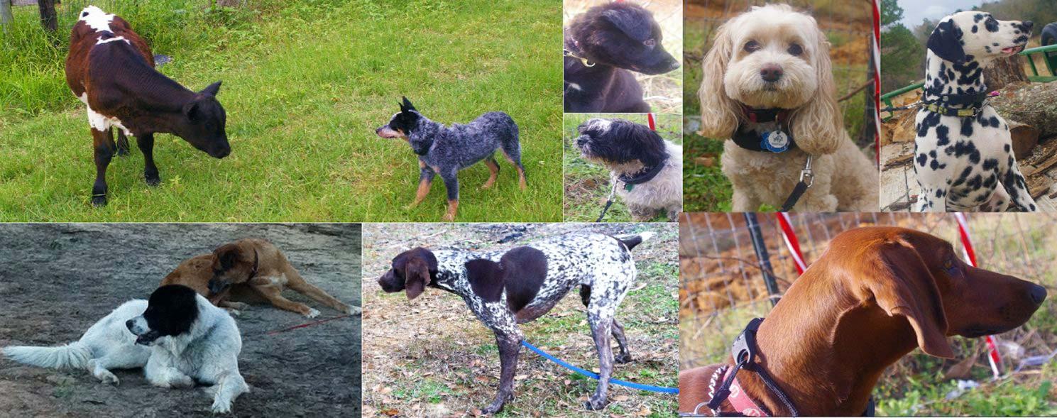 Dog Training In Homestead