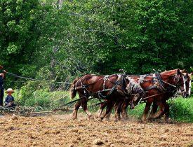 Debunking the Amish Myth, homesteading