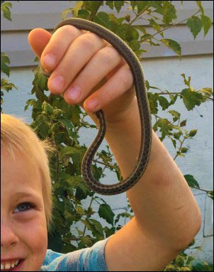 kid holding snake, Becoming a Certified Wildlife Habitat, homesteading, homestead, creating Wildlife Habitat
