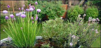 chives-rosemary-thyme-container-herbs, Make Money With Specialty Herbs and Cut Flowers, make money with specialty herbs, cut and come again flowers, make money with herbs, start an herb business successful cut flower business, homesteading, homestead