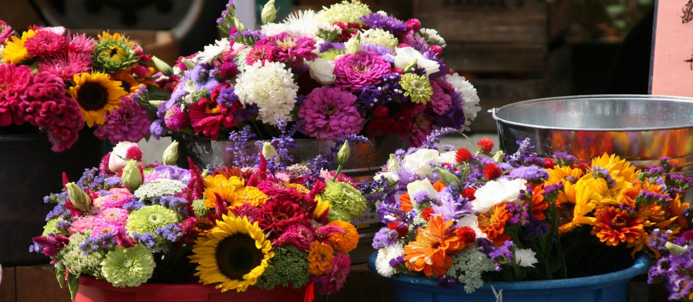 Make MoneyWithSpecialty Herbs and Cut Flowers, make money with specialty herbs, cut and come again flowers, make money with herbs, start an herb business successful cut flower business