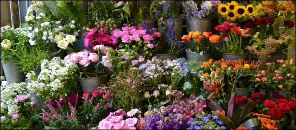 flower market, Make Money With Specialty Herbs and Cut Flowers, make money with specialty herbs, cut and come again flowers, make money with herbs, start an herb business successful cut flower business, homesteading, homestead