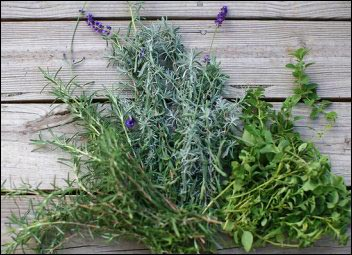 rosemary-lavender-oregano, bouquet garni, Make Money With Specialty Herbs and Cut Flowers, make money with specialty herbs, cut and come again flowers, make money with herbs, start an herb business successful cut flower business, homesteading, homestead