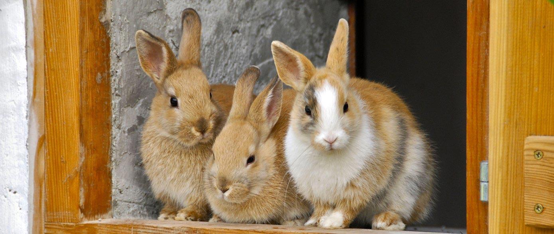 Small Scale Rabbit Farming Homestead Org Livestock