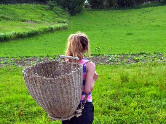 Hesitant-Homesteader, homesteading, thinking about homesteading