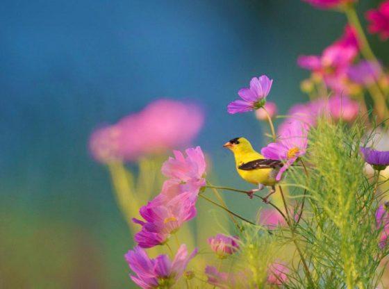 Benefits of Wildflower Lawns