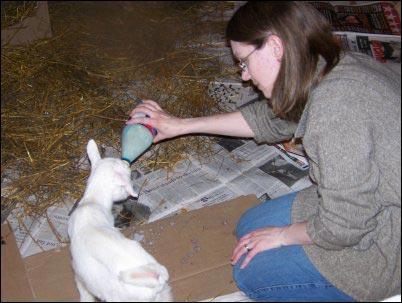 bottle feeding baby goat, composting toilet, Hesitant-Homesteader, homesteading, thinking about homesteading