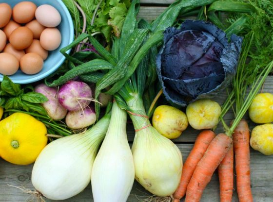 Tips for Starting a CSA, how to start a csa, successful CSA, CSA, Community Supported Agriculture, start a CSA, operating a CSA, homesteading