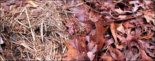 Soiled Straw and Leaf Mulch, clean up the garden for winter, Winter Garden Care, fall garden, fall and winter garden, homesteading