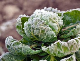 clean up the garden for winter, Winter Garden Care, fall garden, fall and winter garden