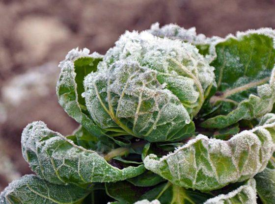 clean up the garden for winter, Winter Garden Care, fall garden, fall and winter garden