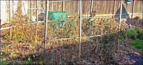 clean up the garden for winter, Winter Garden Care, fall garden, fall and winter garden, homesteading