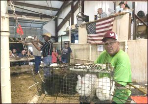 Small Animal Auction, Rural auctions, types of animal auctions, rural animal auctions