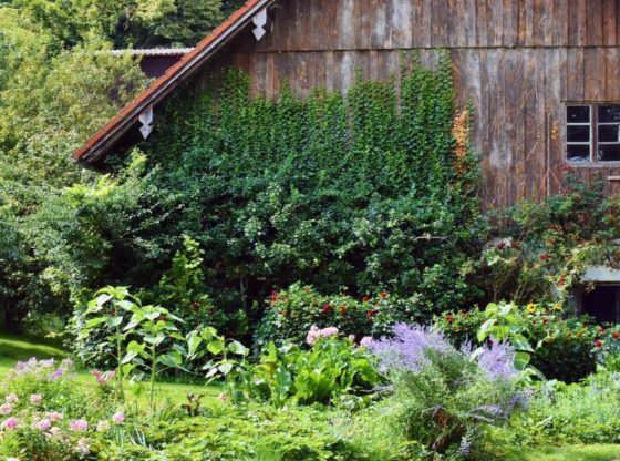 The-Beginners-Guide-to-Becoming-a-Homesteader
