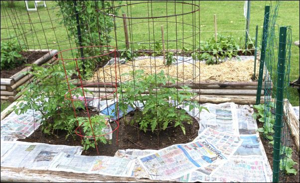 Making Soil with Newspaper and Mulch