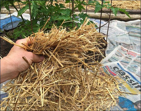 weed-free gardening using mulch and newspaper